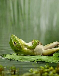 This frog's more relaxed then I'll ever be...