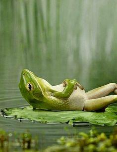 Voor iedereen die van de natuur houd en De natuur hun lief is.