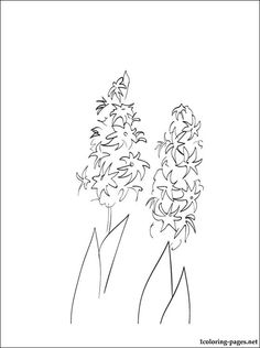 hyacinth printable and coloring page coloring pages