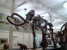 I don't know if this is in the Museum of Natural History but that's the Museum I want to go to.