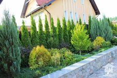 Туя — вечнозеленое  дерево для Вашего сада.  Род туи (Thuja ) относится к  семейству кипарисовые  (Cupressaceae). И хотя это  семейство насчитывает  всего 5 видов, у каждого вида имеется довольно большое  количество декоративных форм.   Специалистами описано более  120 различных форм туи.  В природных условиях туи  произрастают в Северной  Америке,Китае, Японии, Корее.   Наибольшее распространение  на Украине имеют 3 вида туи –  туя западная, туя восточная и туя  складчатая.