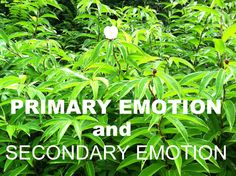 Learning to isolate and use your primary emotions for growth while understanding the origin of your secondary emotions and how they can hurt you, all while gaining mindfulness skills.