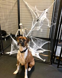 Preston has caught and detained the dog catcher in preparation for tomorrow's Ghouls Gimlets & Grrrowlers event...See you all there!