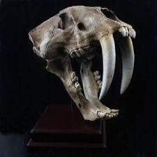 Smilodon skull replica