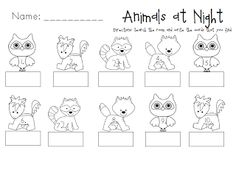 Book ideas for learning about nocturnal animals | * ~ Primary Book ...
