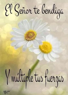 @MRM_50 Hasta mañana reina y sigamos en oración!! DTB Gods Love Quotes, Good Day Quotes, Good Morning Quotes, Good Morning Texts, Good Morning Messages, Night Messages, Good Morning In Spanish, Good Day Wishes, Spanish Greetings