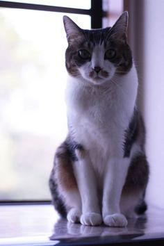 バックシャン - http://iyaiyahajimeru.jp/cat/archives/51209