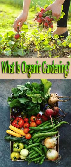 Organic gardening could be described as growing in harmony with nature, without using synthetic fertilizers, pesticides, herbicides or other such products... #gardening #garden #Organic