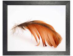 Orange Feather Art Print, Bird Wall Decor, Minimalism Wildlife Instant Download
