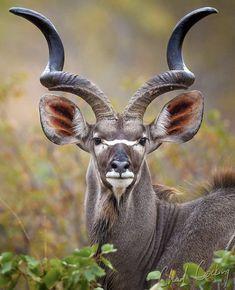 Anima Mundi, Vegan Animals, Kangaroo, Goats, Africa, Nature, Cute, Southern, Twitter