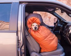 """How does your dog camp? Or does your dog prefer to """"glamp?"""" 16 breathtaking photos of pups camping up on the site now. Cute Puppies, Cute Dogs, Dogs And Puppies, Doggies, Animals And Pets, Funny Animals, Cute Animals, Tier Fotos, Mans Best Friend"""
