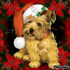 Good Morning Christmas, Merry Christmas My Love, Christmas Drinks, Christmas Goodies, Winter Christmas, Christmas Lights, Vintage Christmas, Christmas Cards, Christmas Decorations