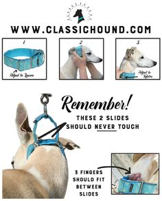 Martingale 101 -How to properly fit a martingale dog collar for your sighthound or escape artist dog! | Classic Hound Collar Co.
