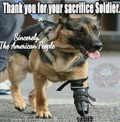 We can't forget how many lives our four legged soldiers have saved.