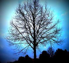 Neighbourhood Tree . Spring time