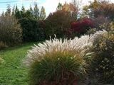 http://pepiniere-laurent.fr/sections/view.php?id=32&action=en-automne