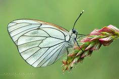 great-butterfly-photography (22)