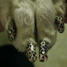 Leopard dog nails(**miss doing my chow chows nails fun colors I only do my pits once in awhile)