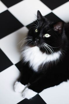 The carpet camouflage Cityscape Bliss // Naughty Felines, black and white tuxedo cat kitten, pet camouflage