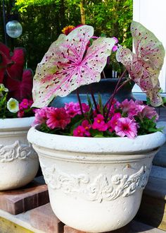 Looking for bold color and texture in your summer containers? Try caladiums for a season-long show. Learn more at The Home Depot's Garden Club.