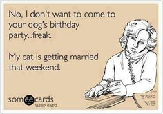 """No, I don't want to come to your dog's birthday party ... freak. My cat is getting married this weekend."""
