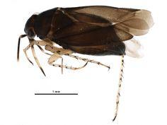 Plant Bugs, Newfoundland And Labrador, New Image, Centre, National Parks, Public, Canada