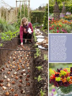 http://countrylivinged.com/wp-content/uploads/2012/10/sarah-raven-tulips.jpg