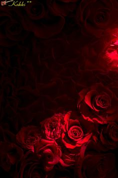^ A rose 🌹 by any other name would still smell as sweet. Red And Black Wallpaper, Red Wallpaper, Wallpaper Backgrounds, Beautiful Rose Flowers, Red Flowers, Red Roses, Flower Phone Wallpaper, Cellphone Wallpaper, Wattpad Background