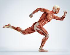 Training nach Muskelgruppen - In dieser INFOGRAFIK sehen Sie alle Muskelgruppen und dazu die Fitnessübungen wie Sie diese Muskelgruppe trainieren können.