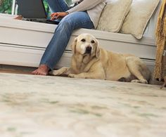 How to Remove Pet Urine Stains from Carpet Cleaning Products, Cleaning Diy, Cleaning Services