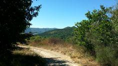 Paisaje ruta de los molinos de San Miguel Country Roads, San Miguel, Paths, Scenery, Fotografia