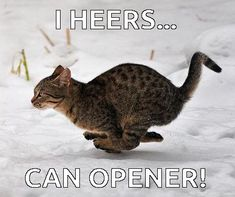 ( Can opener is 3 miles away. get some yourself some pawtastic adorable cat apparel! Funny Animal Photos, Cute Funny Animals, Funniest Animals, Puppies And Kitties, Cats And Kittens, Funny Cat Memes, Funny Cats, Brave, Animal Humour