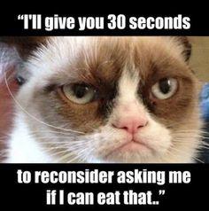 Grumpy cat knows best