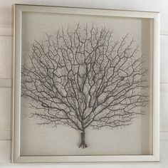 Coral Branch in Shadowbox