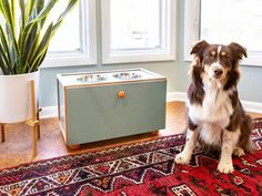 The budget decorating pros at HGTV share trendy DIY accessory and home decor projects you can make to freshen up your home's style for less. Built In Storage, Diy Storage, Dog Feeding Station, Raised Dog Bowls, Diy Stuffed Animals, Decorating On A Budget, Hgtv, Cookies Et Biscuits, Easy Diy
