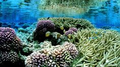 In deze foto vrijgegeven door de Amerikaanse Fish and Wildlife Service, zijn roze koralen gezien op de Palmyra-atol in de Stille Oceaan.