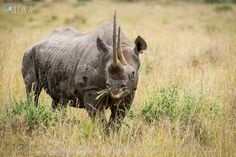 Happy World Rhino Day from your friends at IFAW. Stay in touch while we fight for Rhinos and other animals in need with our newsletter: http://g.ifaw.org/1JmSLFl