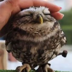 omg baby owl, not a stuffed animal