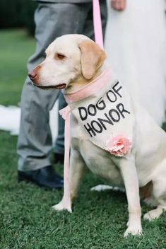 dog in wedding ceremony - dog in wedding ; dog in wedding ideas ; dog in wedding ceremony ; dog in wedding pictures ; dog in wedding cake ; dog in wedding how to incorporate ; dog in wedding dress ; dog in wedding ring bearer Wedding Tips, Fall Wedding, Garden Wedding, Dogs In Wedding, Dog Wedding Attire, Dog Wedding Dress, Wedding Ceremony Ideas, Wedding Timeline, Budget Wedding