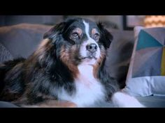 YOGA Tablet 2 Pro Valentine's Day Ad 2015 - Cupid Dog - YouTube