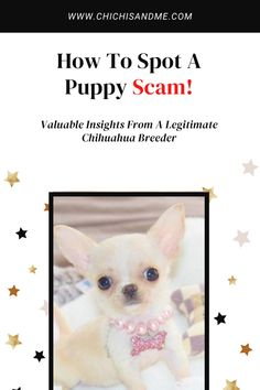 I'm not talking about puppy mills or backyard breeders ... this is a whole new type of puppy scam! #chihuahuacare, #chihuahuapuppies, #seniorchihuahua, #chihuahuadogs, #chihuahuamix, #chihuahuafacts, #chihuahuaarticles, #chihuahuahelp, #chiwawa, #chihuahuahealthissues, #chihuahuaproblems, #chihuahuawebsite, #chihuahuabehaviorissues #chi, #chihuahuastory, #littledogs, #tinydogs, #minidogs Chihuahua Breeders, Chihuahua Facts, Dog Lover Quotes, Dog Quotes, Best Q, Tattoos For Dog Lovers, Happy Birthday Dog, Akc Breeds, Lovers Pics