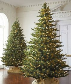 Two twinkling trees. Simple. Christmas. Celebrate.   from: ZsaZsa Bellagio.  This was how my looked tree this year