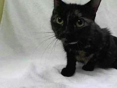 Please save Parlay from death today at the ACC shelter in New York City URGENT visit pets on death row on Facebook.