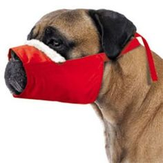 Cozy Quick Muzzle Red *** Be sure to check out this awesome product. (This is an affiliate link and I receive a commission for the sales) Dog Muzzle, Dog Itching, Dog Dental Care, Dog Training Pads, Dog Food Storage, Dog Shower, Dog Shedding, Dog Eyes, Dog Diapers