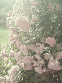 ダッシュボード - Reblogen