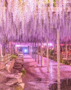 TakaさんはInstagramを利用しています:「. 初めて藤を撮ったけど、こんなにアートになるとは本当に思わなかった。 . 来年はまたココと、栃木の足利(とあわよくば、茨城ひたちなかのネモフィラもセットで)撮りに行きたい。笑 . . 愛知・天王川公園(夜編) Wisteria Festival Tennougawa-koen…」 Aichi, Moon Photography, Amazing Photography, Landscape Photography, Beautiful Places To Visit, Cool Places To Visit, Beautiful World, Fantasy Landscape, Landscape Art