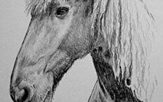 Pferdeportrait Bleistiftzeichnung