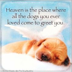 """Heaven is the place where all the dogs you ever loved come to greet you"" ~ Alanna Chasin, aka The Dog Buddha • photo: Charles Mann http://www.cmannphoto.com/ on http://www.gettyimages.ca/detail/photo/sleeping-angel-new-born-puppy-sleeping-in-clouds-royalty-free-image/135808458"