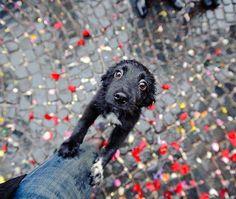 Wet pup
