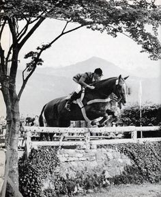 Frank Chapot on San Lucas in Lucerne 1966 San Lucas 1990 Induction Bio – Show Jumping Hall of Fame  http://showjumpinghalloffame.net/pdf/1990%20San%20Lucas.pdf